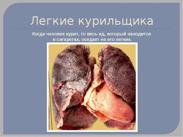 Легкие курильщика Когда человек курит, то весь яд, который находится в сигаре...