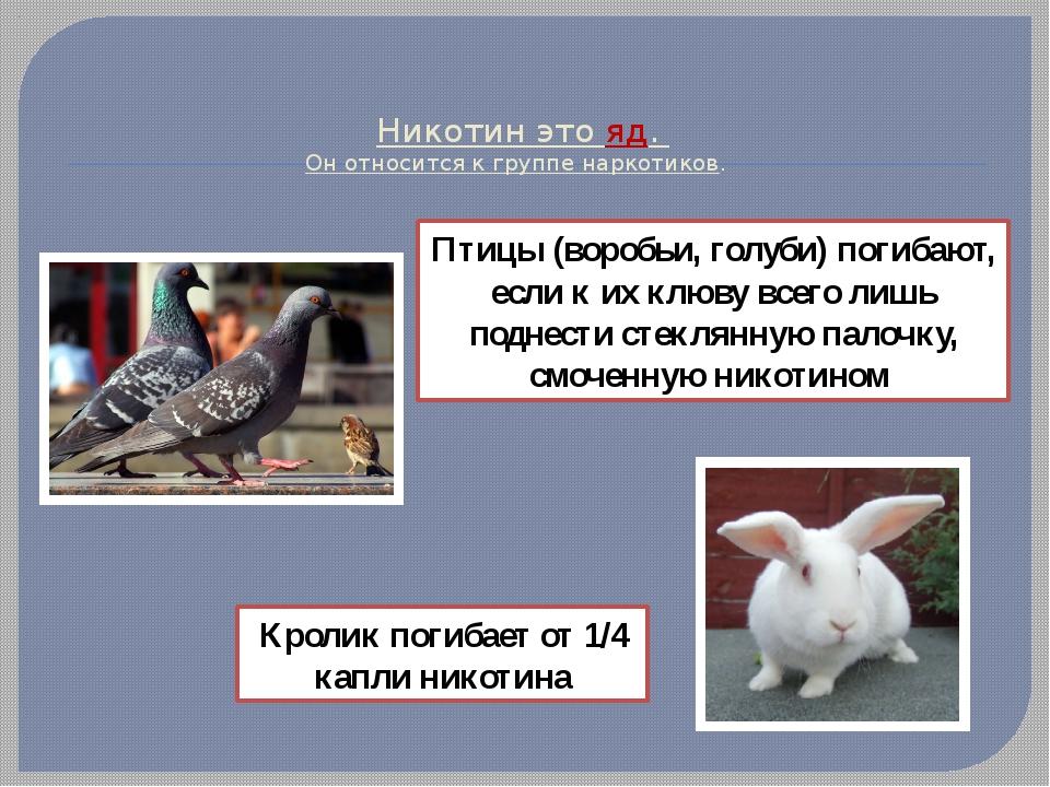 Никотин это яд. Он относится к группе наркотиков. Птицы (воробьи, голуби) по...