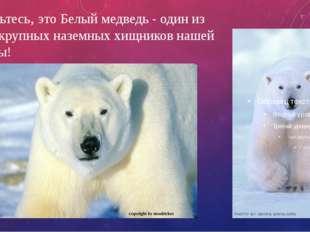 Знакомьтесь, это Белый медведь - один из самых крупных наземныххищников наше