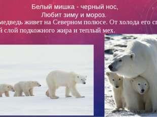 Белый мишка - черный нос, Любит зиму и мороз. Белый медведь живет на Северном