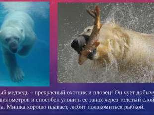 Белый медведь – прекрасный охотник и пловец! Он чует добычу за 5-7 километров