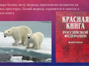 Благодаря белому меху, медведь практически незаметен на снежных просторах. Бе