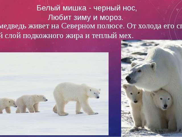 Белый мишка - черный нос, Любит зиму и мороз. Белый медведь живет на Северном...