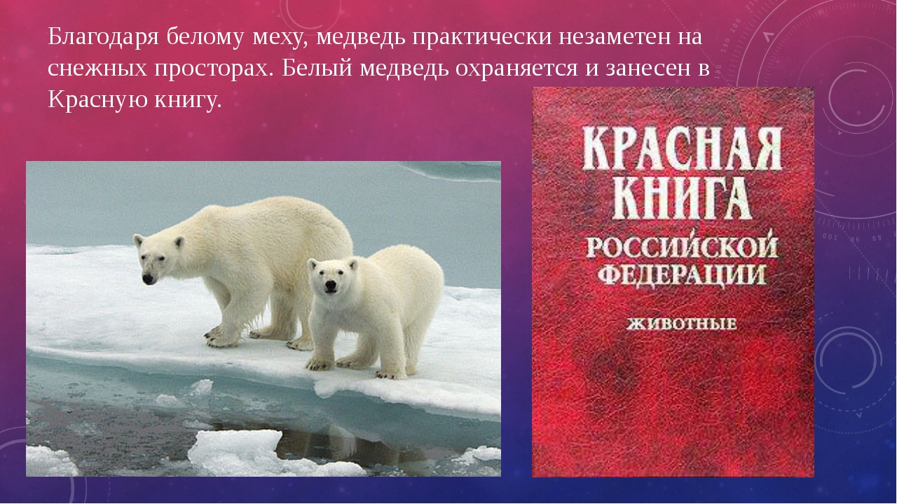 Благодаря белому меху, медведь практически незаметен на снежных просторах. Бе...
