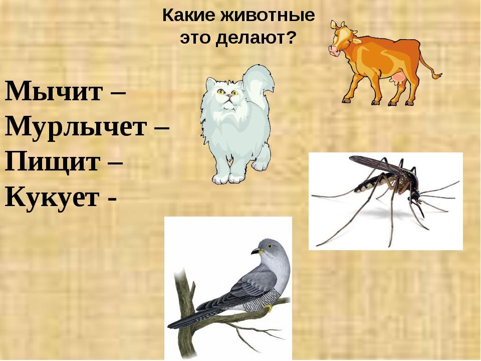 Какие животные это делают? Мычит – Мурлычет – Пищит – Кукует -