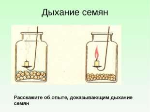 Дыхание семян Расскажите об опыте, доказывающим дыхание семян