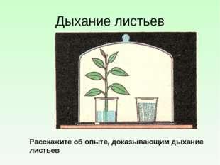 Дыхание листьев Расскажите об опыте, доказывающим дыхание листьев