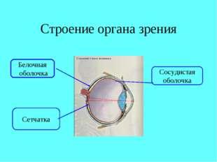 Строение органа зрения Белочная оболочка Сетчатка Сосудистая оболочка