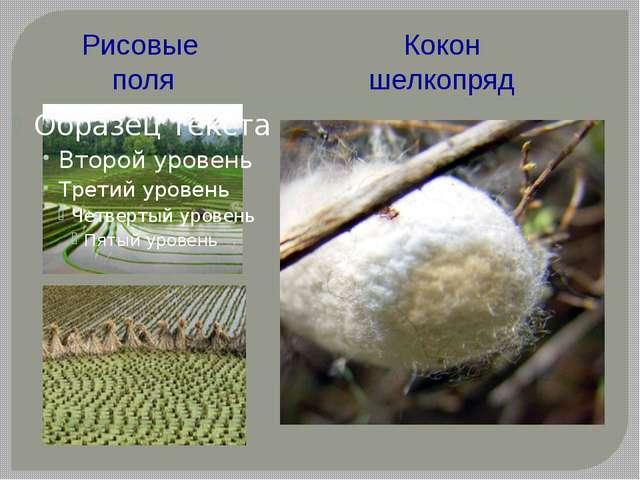 Рисовые поля Кокон шелкопряд