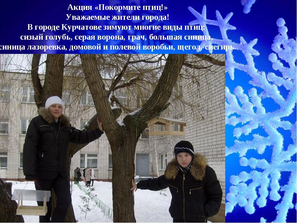 Акция «Покормите птиц!» Уважаемые жители города! В городе Курчатове зимуют мн...