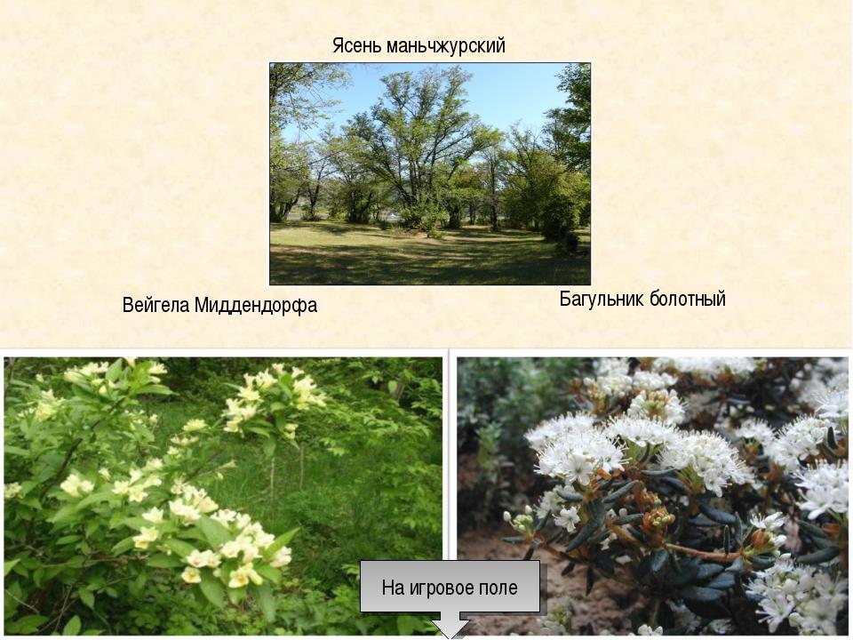 Ясень маньчжурский Вейгела Миддендорфа Багульник болотный На игровое поле