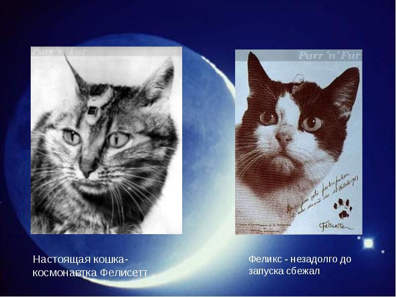 http://rpp.nashaucheba.ru/pars_docs/refs/166/165084/img28.jpg