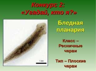 Конкурс 2: «Угадай, кто я?» Бледная планария Класс – Ресничные черви Тип – П
