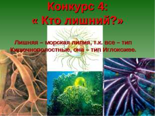 Конкурс 4: « Кто лишний?» Лишняя – морская лилия, т.к. все – тип Кишечнополо