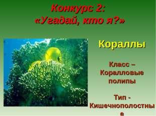 Конкурс 2: «Угадай, кто я?» Кораллы Класс – Коралловые полипы Тип - Кишечноп