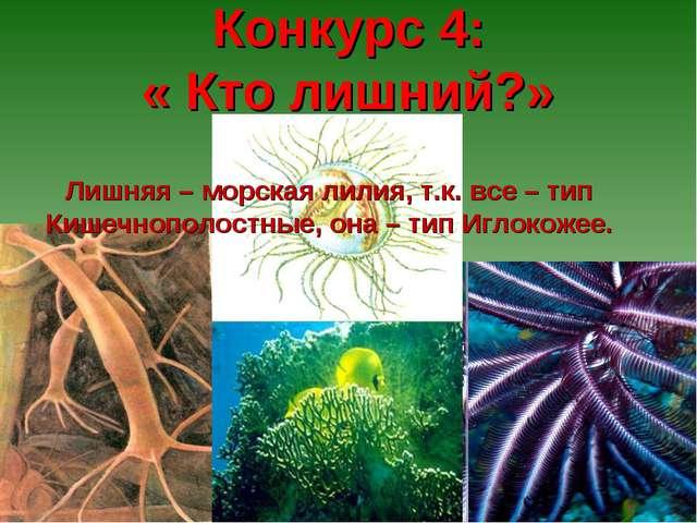 Конкурс 4: « Кто лишний?» Лишняя – морская лилия, т.к. все – тип Кишечнополо...