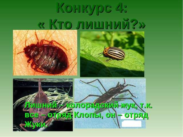 Конкурс 4: « Кто лишний?» Лишний – колорадский жук, т.к. все – отряд Клопы,...