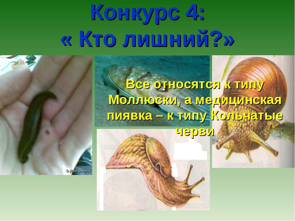 Конкурс 4: « Кто лишний?» Все относятся к типу Моллюски, а медицинская пиявк...