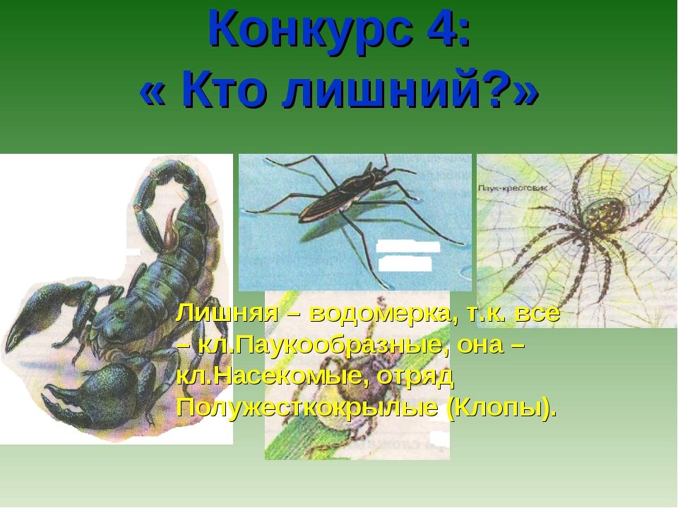 Конкурс 4: « Кто лишний?» Лишняя – водомерка, т.к. все – кл.Паукообразные, о...