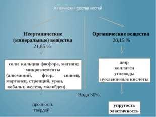 Химический состав костей Неорганические (минеральные) вещества 21,85 % Органи