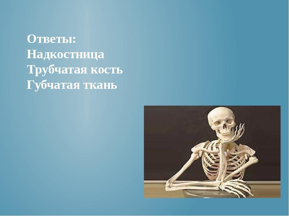 Ответы: Надкостница Трубчатая кость Губчатая ткань
