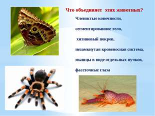 Что объединяет этих животных? Членистые конечности, сегментированное тело, хи