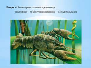 Вопрос 4. Речные раки плавают при помощи: а) клешней б) хвостового плавника