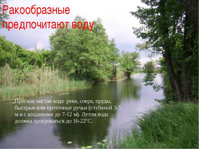 Ракообразные предпочитают воду Пресная чистая вода: реки, озера, пруды, быстр...