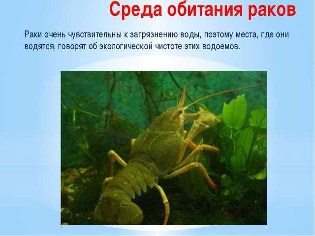 Среда обитания раков Раки очень чувствительны к загрязнению воды, поэтому мес...