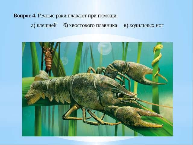 Вопрос 4. Речные раки плавают при помощи: а) клешней б) хвостового плавника...