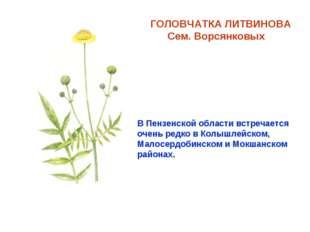 ГОЛОВЧАТКА ЛИТВИНОВА Сем. Ворсянковых В Пензенской области встречается очень
