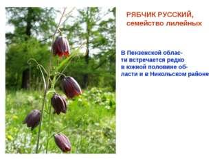 РЯБЧИК РУССКИЙ, семейство лилейных В Пензенской облас- ти встречается редко в