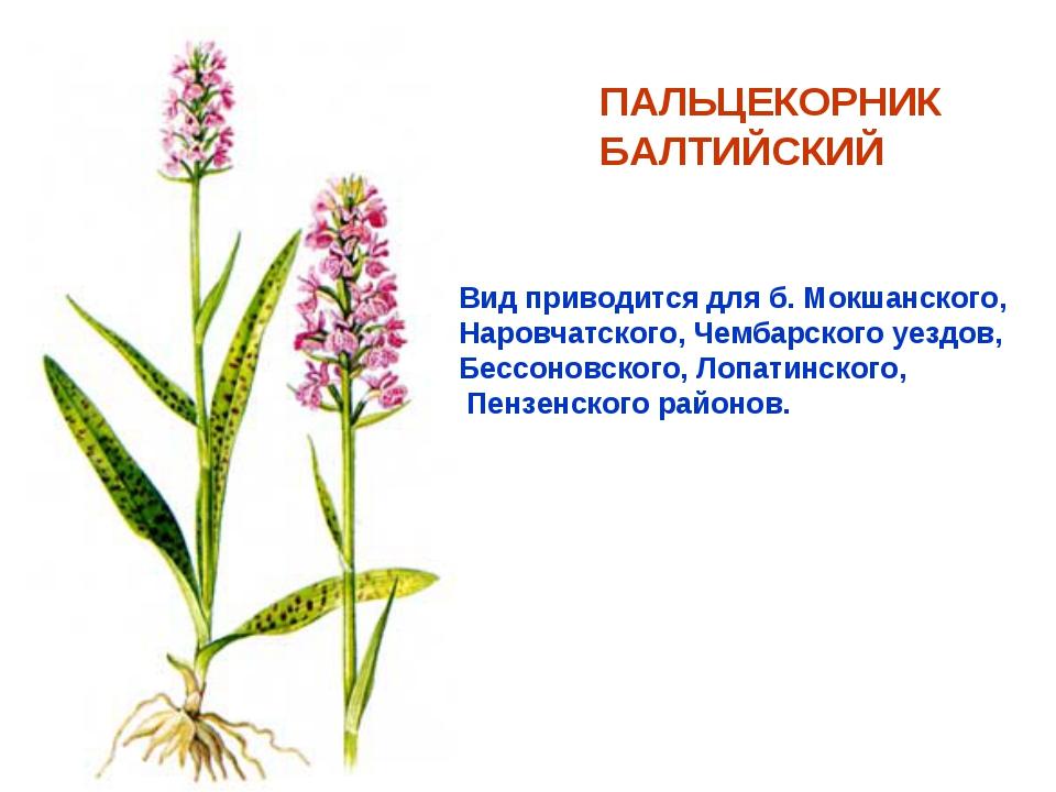 ПАЛЬЦЕКОРНИК БАЛТИЙСКИЙ Вид приводится для б. Мокшанского, Наровчатского, Чем...