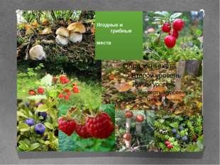 Ягодные и грибные места