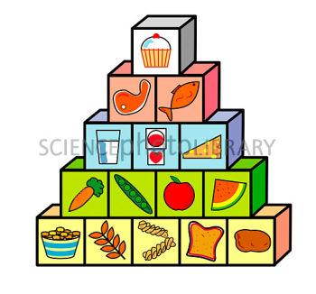 http://www.sciencephoto.com/image/218309/350wm/H1102644-Food_pyramid-SPL.jpg