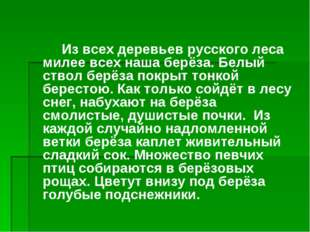 Из всех деревьев русского леса милее всех наша берёза. Белый ствол берёза по