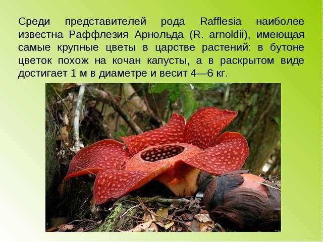 Среди представителей рода Rafflesia наиболее известна Раффлезия Арнольда (R....