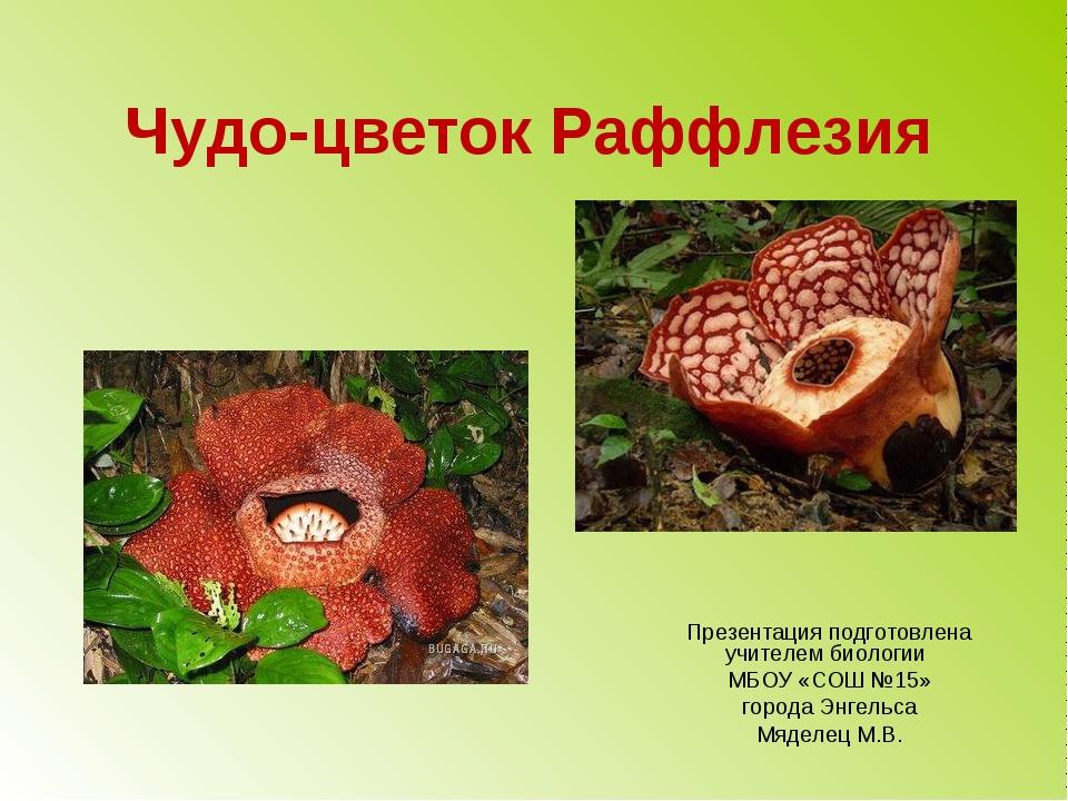 Чудо-цветок Раффлезия Презентация подготовлена учителем биологии МБОУ «СОШ №...