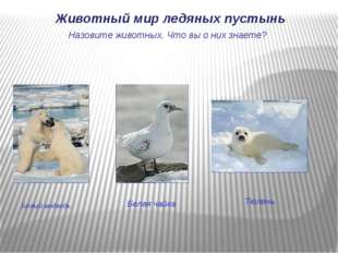 Белый медведь Животный мир ледяных пустынь Тюлень Назовите животных. Что вы о