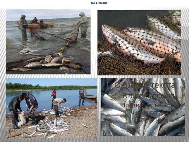 рыбаловство