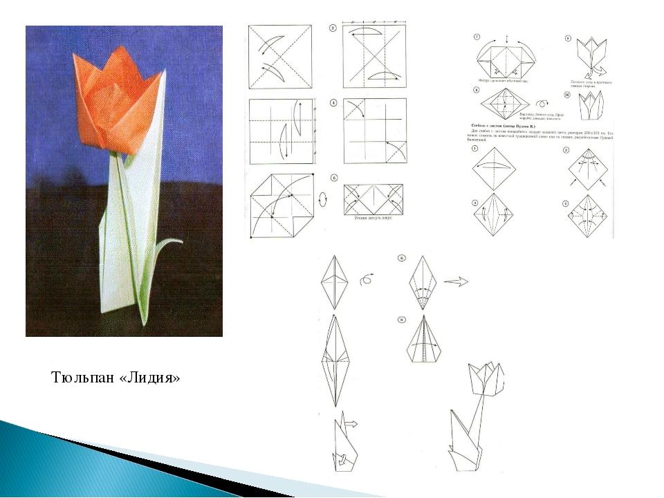 Тюльпан «Лидия»