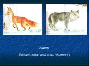 Задание Исследуй, найди, рисуй следы лисы и волка