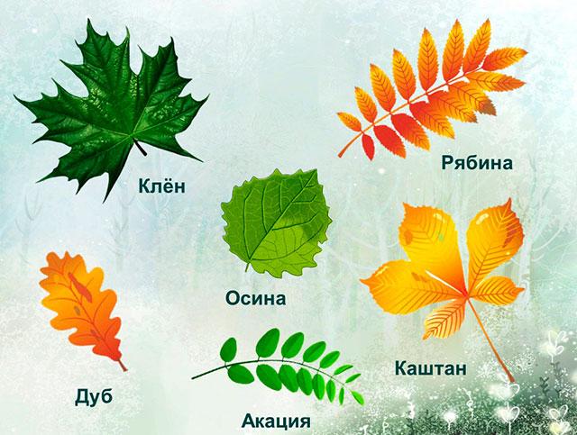 http://ped-kopilka.ru/images/3(352).jpg