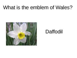 What is the emblem of Wales? Daffodil