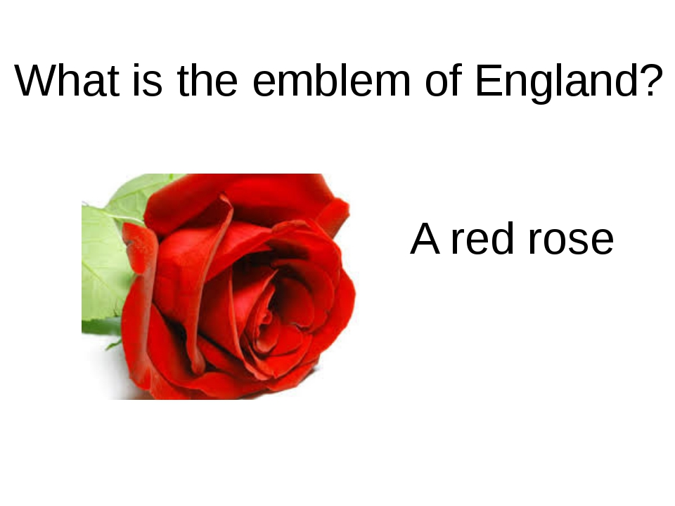 What is the emblem of England? A red rose