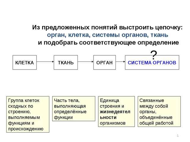 * Из предложенных понятий выстроить цепочку: орган, клетка, системы органов,...