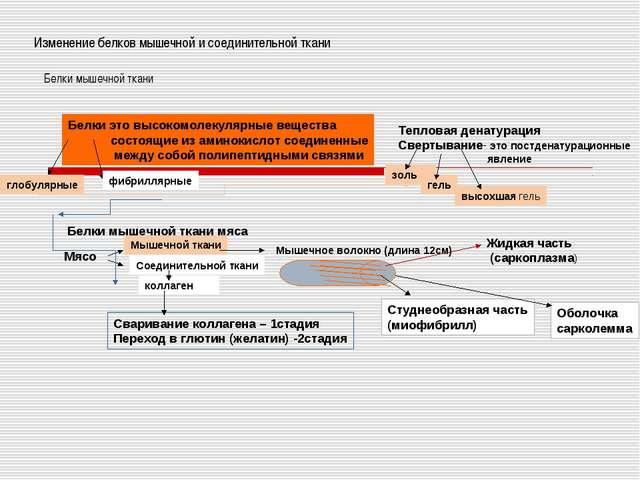 Изменение белков мышечной и соединительной ткани Белки мышечной ткани Белки э...