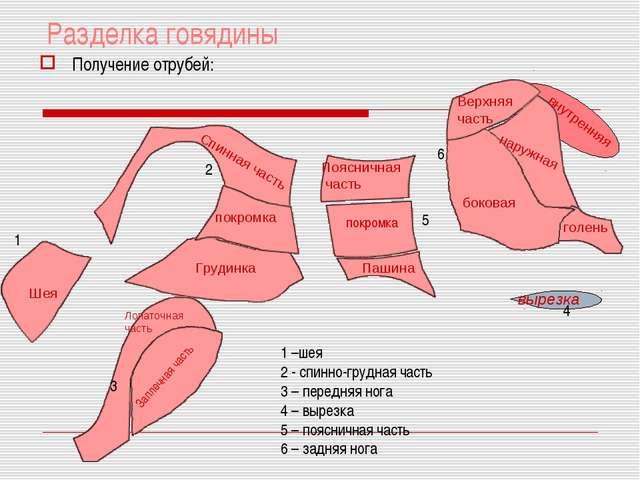 Разделка говядины Получение отрубей: Шея 1 4 1 –шея 2 - спинно-грудная часть...