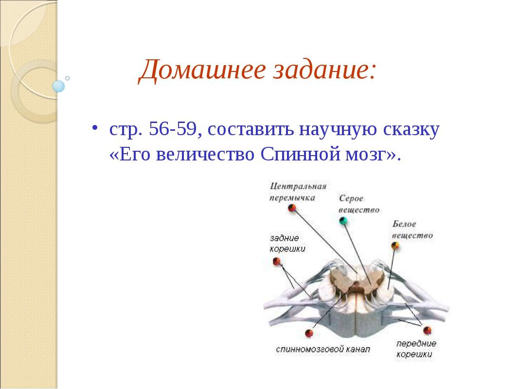 Домашнее задание: стр. 56-59, составить научную сказку «Его величество Спинно...
