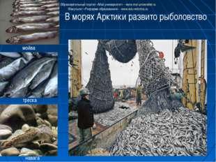 В морях Арктики развито рыболовство мойва треска навага Образовательный порта